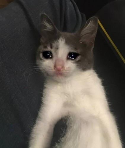 Sad Cat 3.jpg